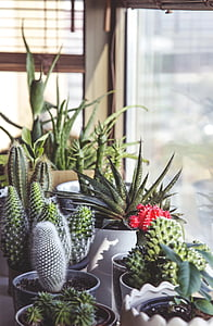 Grün, Sukkulenten, Pflanzen, Keramik, Töpfen, Topfpflanze, Anlage