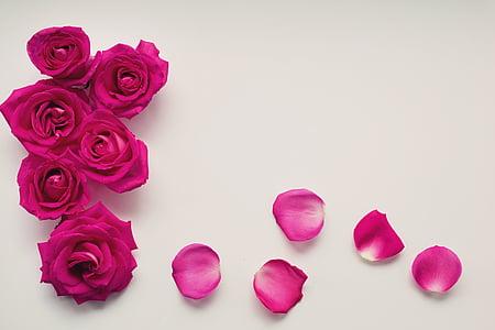 Roses, pètals, fons, fons de text, espai de text, floral, romàntic
