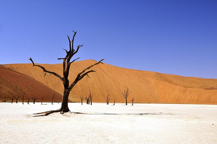 drevo, puščava, Namibija, Dead vlei, deadvlei, Clay ponev, suša