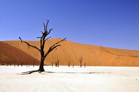 arbre, desert de, Namíbia, vlei mort, deadvlei, Cassola de fang, sequera