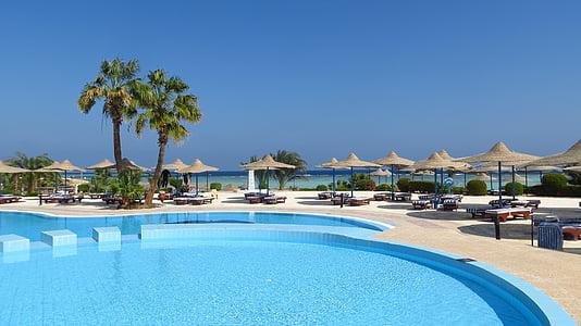 Havuzu, palmiye ağaçları, otel, tablolar, şemsiye, şezlonglar, Resort