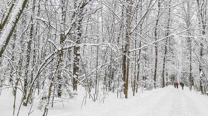 talvi, maisema, Metsä, lumi, puut, kylmä, Luonto
