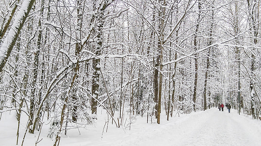 winter, landscape, forest, snow, trees, cold, nature