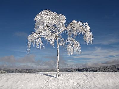 l'hivern, cobert de neu, avets, Nadal, fred, neu, blanc