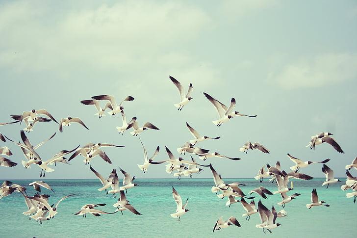 чайки, плаж, птица, птици, Криле, природата, море
