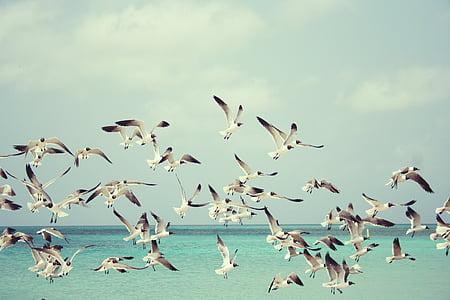 海鸥, 海滩, 鸟, 鸟类, 翅膀, 自然, 海