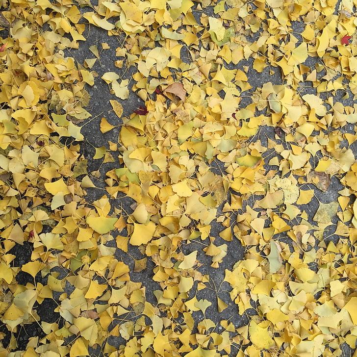 autumn, bank leaves, bank, floor, leaf, backgrounds, nature