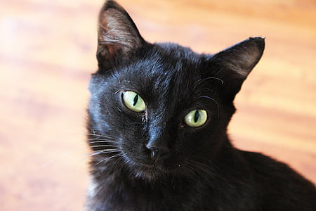 cat, animal, black, pet, portrait, cat person, closeup