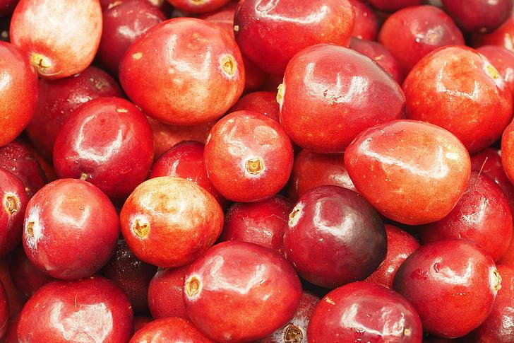 airela, colher, frutas, azedo, vermelho, natureza, delicioso