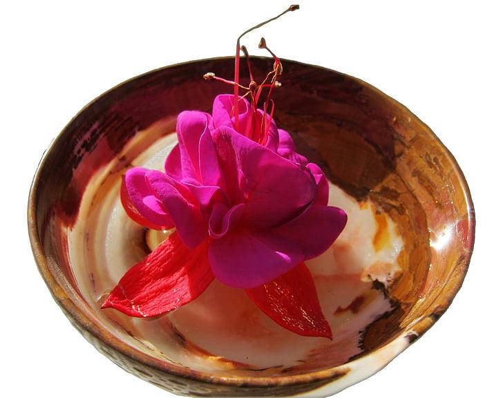 closca, flor, flor, decoració, flor, benestar, aïllats