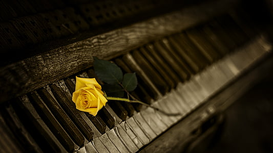 piano, Rosa, groc, l'interior, no hi ha persones, close-up, dia