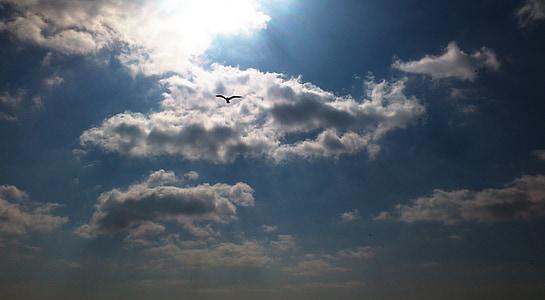 sky, the sky, clouds, bird, seagull