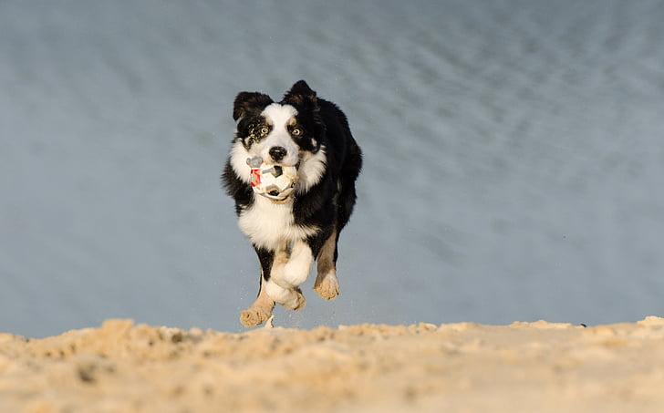 young dog, running dog, playing dog, dog on beach, dog, pets, animal