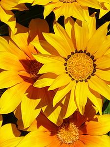lill, kollane, taust, Ilu, detail, lilled tapeet