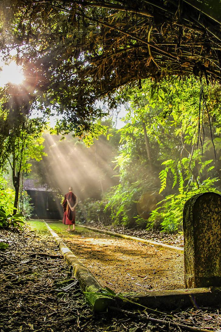THERAVADA Budisms, pastaigas meditācija, Monks, Budisms, budistu, kultūra, Meditācija