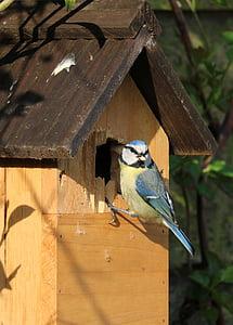 blue tit, bird, caterpillar, bird box, bird house