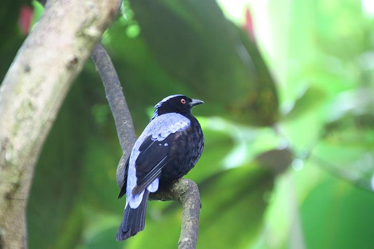 ptica, eksotične, eksotičnih ptic, narave, živalski svet