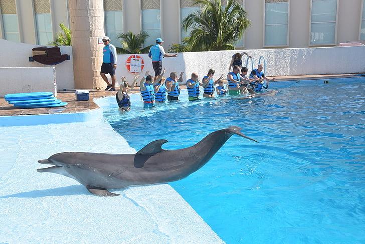 делфините, риба, животните, още делфинариум, терапия, забавно, разсейване