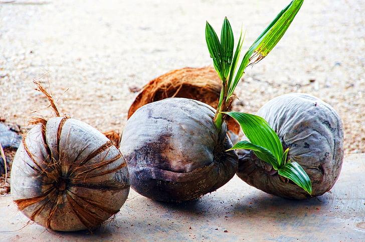 kokos, sadje, sadje, eksotične