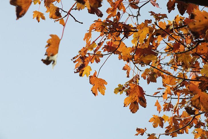 jeseň, jeseň spustiť, Zlatá jeseň, listy na jeseň, októbra, farebné, Farba