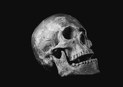 skull, helplessness, bone, scull, human Skull, human Bone, halloween