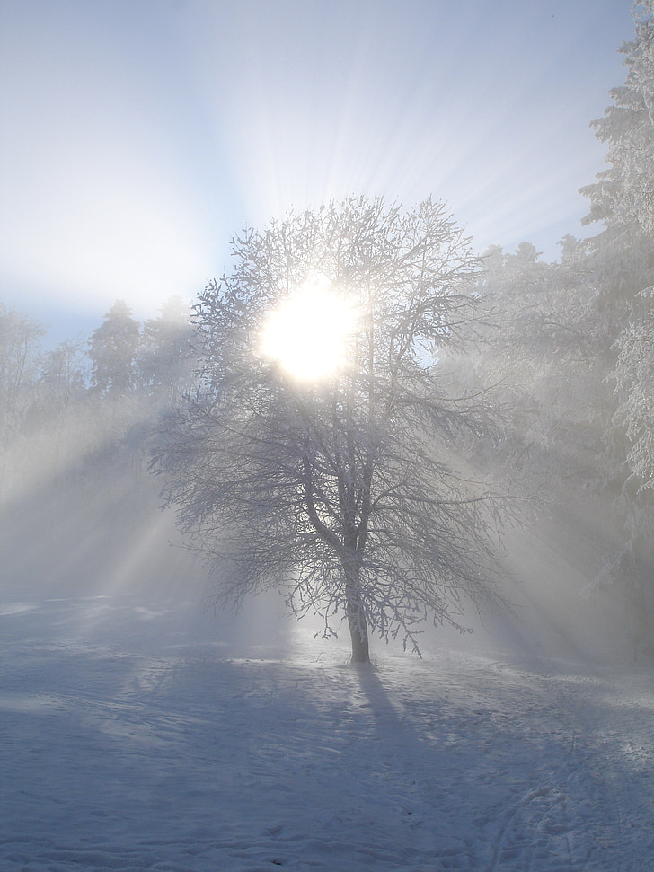 winter sun, winter, sun, tree, snow, sunlight, back light
