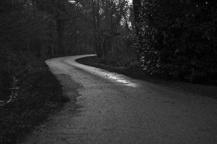đường nông thôn, đường, Quốc gia lane, con đường đất nước, màu đen và trắng, rừng, ma quái
