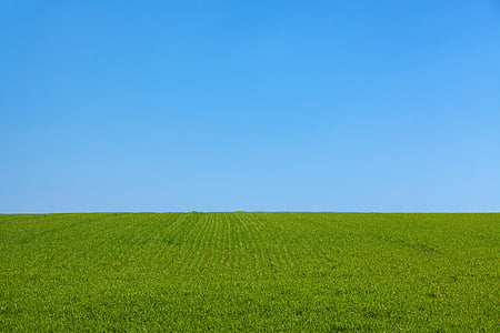 fotos, verd, gespa, diürna, herba, paisatge, natura