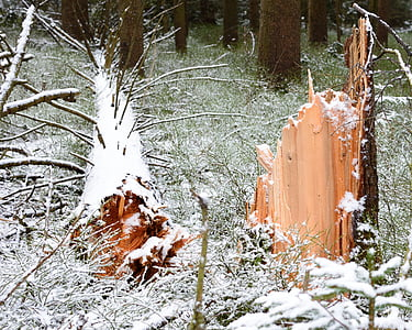 medi ambient, natura, tempesta dany, bosc, arbre, vell, registre