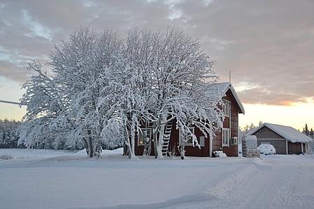 lapland, sweden, snow, landscape, winter, cold - Temperature, tree