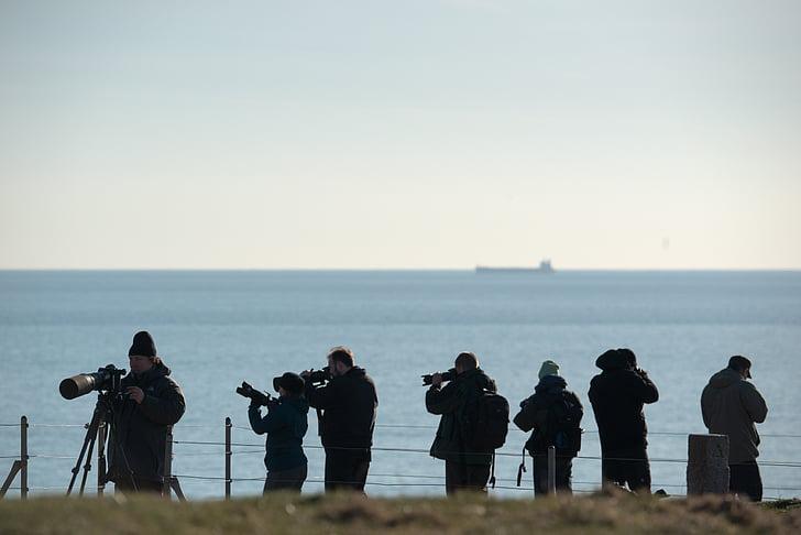 fotós, telefotó objektívek, akcióban, Fénykép, madár fotózás, Madarászat, Helgoland