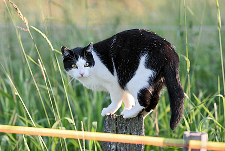cat, fence post, spring, hunter