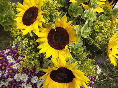 päevalilled, päevalill, taimed, kollane, lilled, kollane lill, Aed