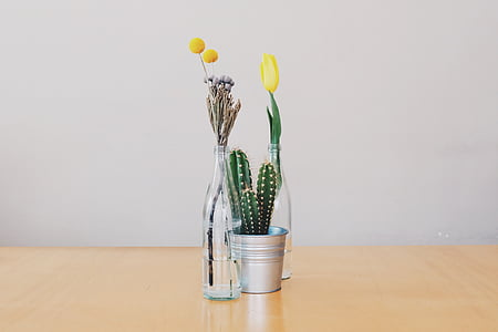 flors, gerros, cactus, tulipes, decoració, objectes, bodegons