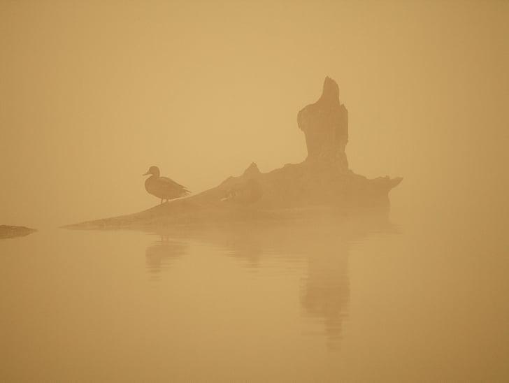 птици, сутрин, вода, мъгла, Ориндж, климат, природата