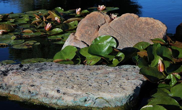 Lily podkładki, staw, wiosna, woda roślin, lilia wodna, Jezioro, Kwitnienie