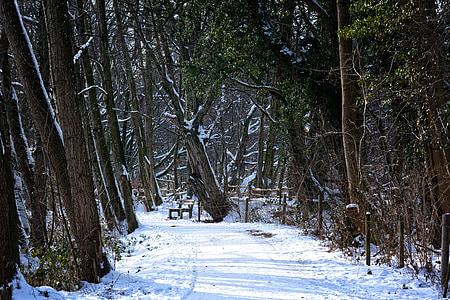winter, snow, forest, away, trees, wintry, winter forest