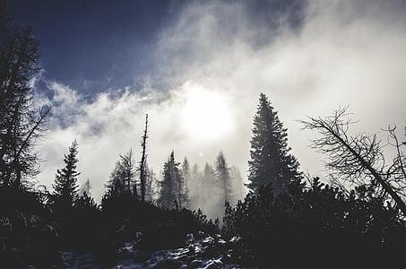 firs, fog, forest, haze, mystical, nature, snow