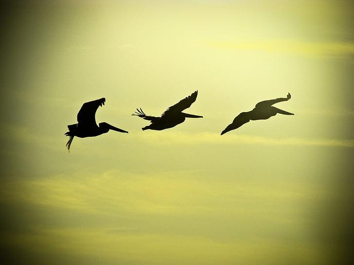 полет, птици, небе, птици в полет, лети, фауна, гнездо