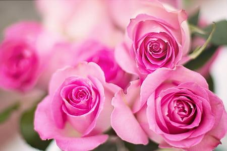 Roses roses, Roses, flors, Romanç, romàntic, l'amor, Sant Valentí
