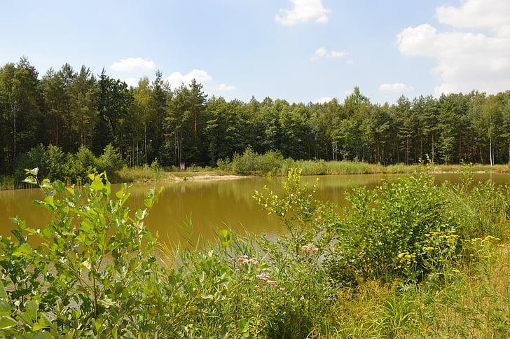 pond, water, forest, forest pond, landscape, surface, sky