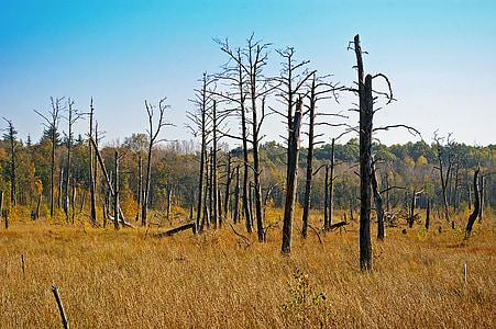 Moor, arbre moribund, natura, medi ambient, protecció del medi ambient, sensible, waldsterben