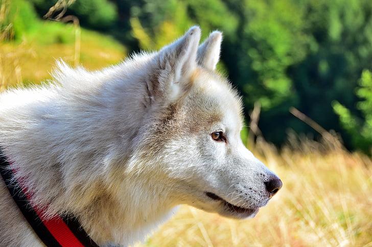 Tiere, Hund, Abstandhalter, ein Tier, Tierthema, Vordergrund im Fokus, Tag
