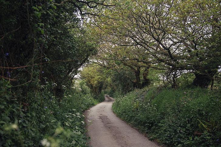 Szlak, lasu, kwiaty, droga krajowa, przyszłe działania, drzewo, Natura
