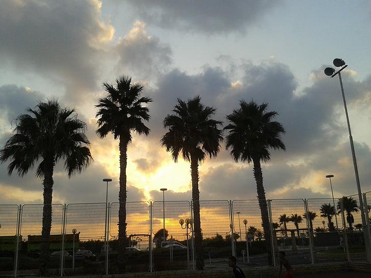 palm trees, cloud, 4 palm, sunset, sky, light, color