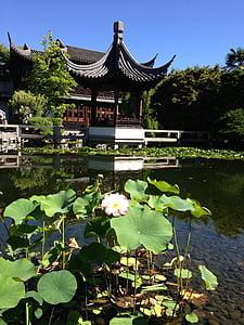 Temple, Lotus, Zen, Conca, jardí japonès, Àsia, verd