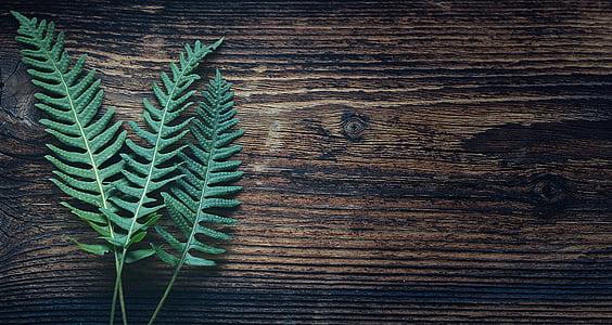 Fern, bitki, doğa, Fern bitki, yaprakları, Yeşil, ahşap