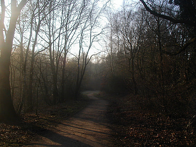camí del bosc, sol de matí, boira, bosc, atmosfèrica