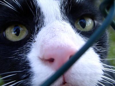 котка, котка лице, котешки очи, любопитни, котка нос