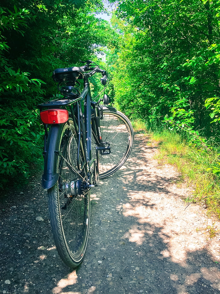cykel, turism, skogsväg, rekreation